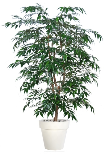 Myrsifolia Natural Style 150 cm Green
